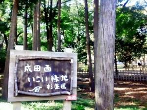 成田西いこい緑地?