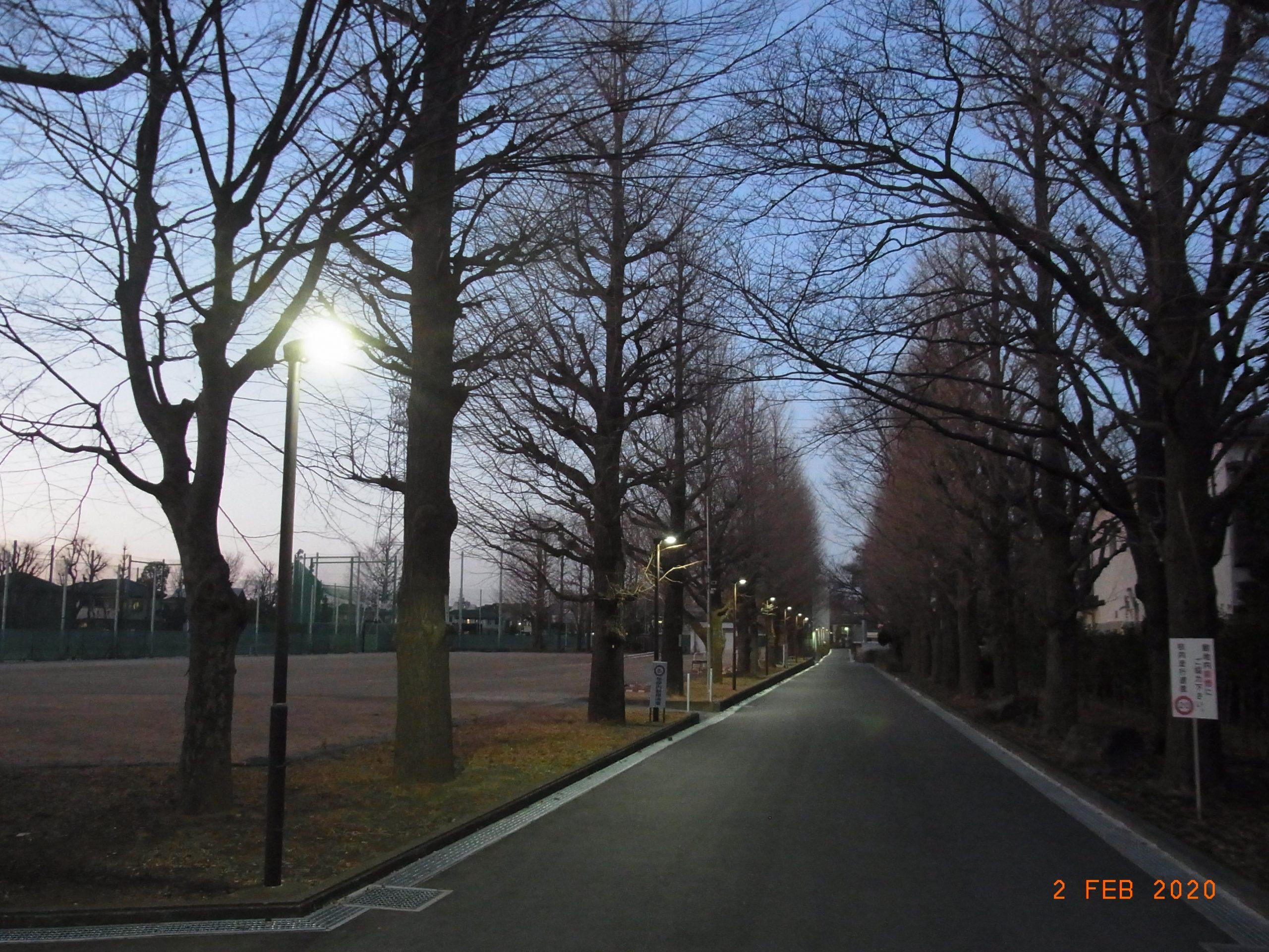 夕暮れどきの銀杏並木