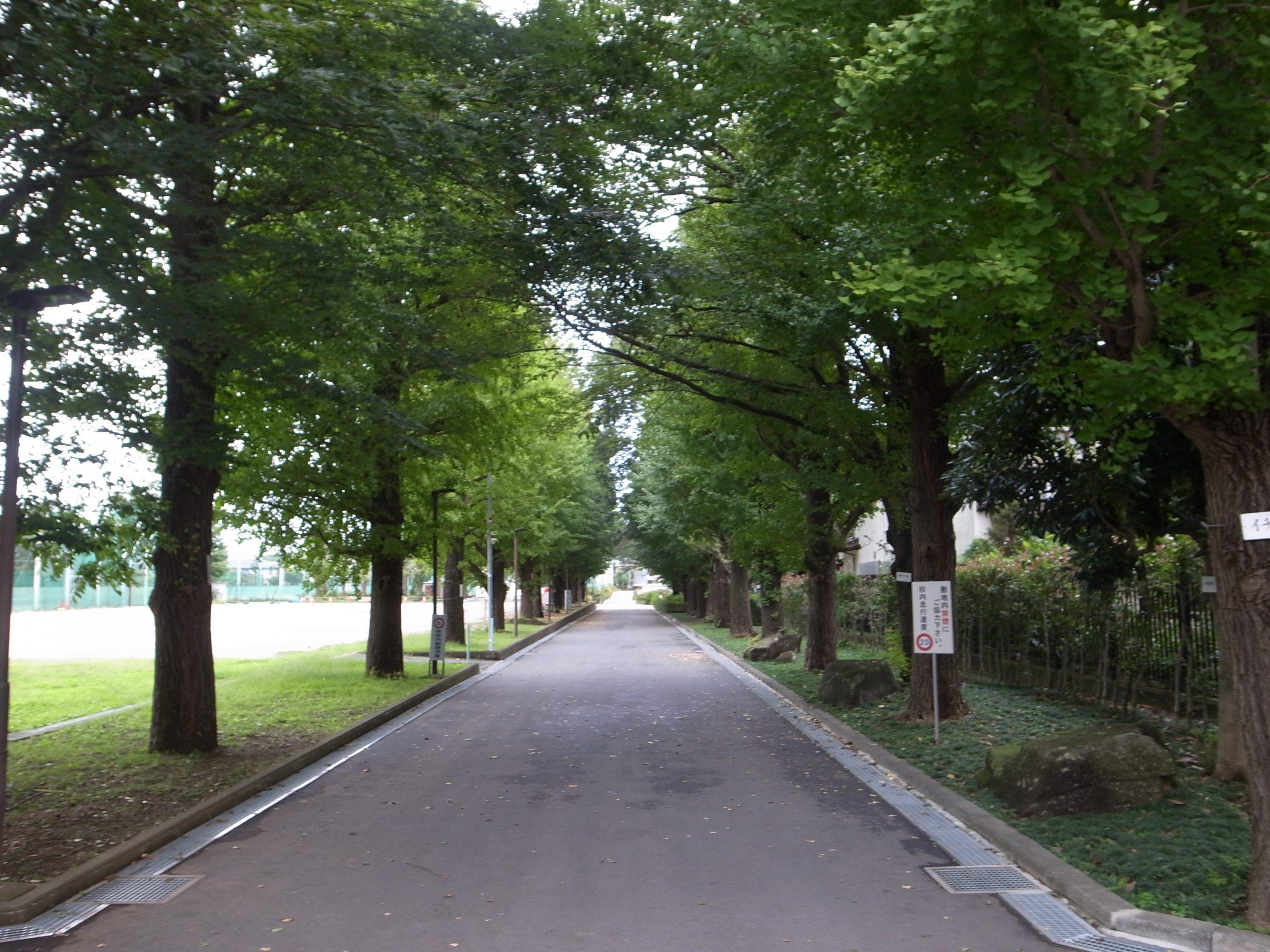 秋の通学路銀杏の葉は緑だがギンナンが落ち始めた